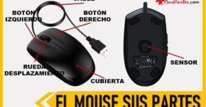 cuales son las partes de un mouse