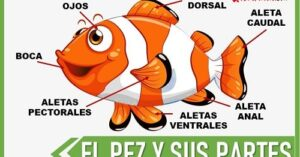 partes de un pez