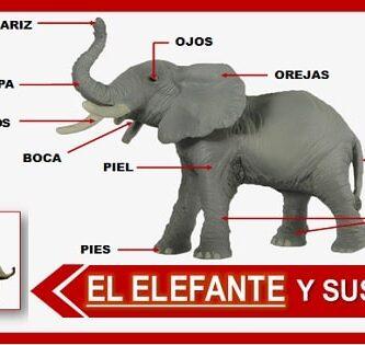 Listado de las partes del elefante